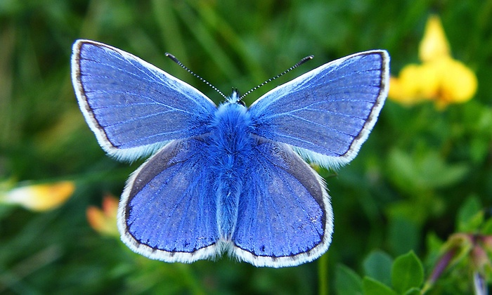 Butterfly Blues Getty Images